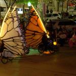 Fort_Worth_Butterflies-001