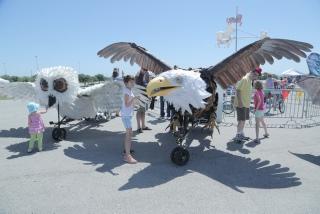 austin bike zoo eagle